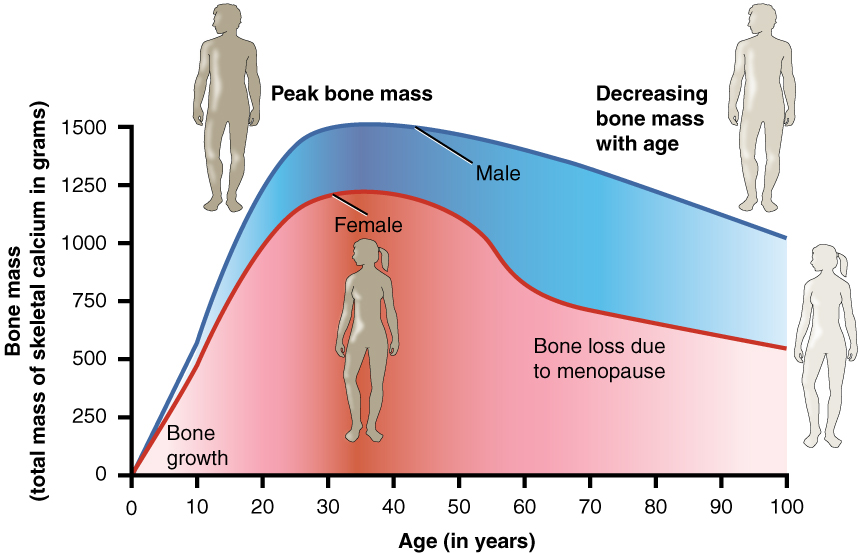 11.7.3 Bone density and age