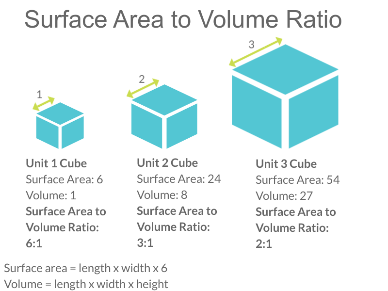 Image shows three cubes: a small, a medium and a large. The cube with length of 1 has a surface area to volume ratio of 6:1. The cube with a length of 2 has a surface area to volume ratio of 3:1 and the cube with the length of 3 has a surface area to volume ratio of 2:1.
