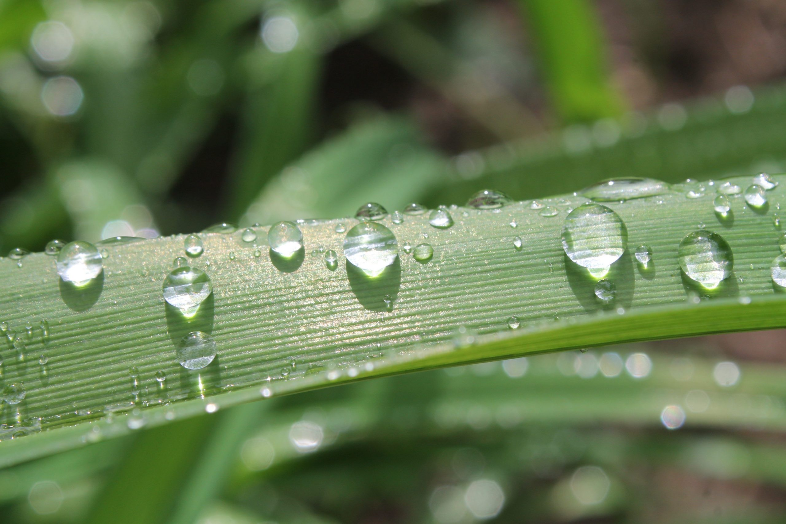 Image shows a close-up photograph of dewdrops on a blade of grass.