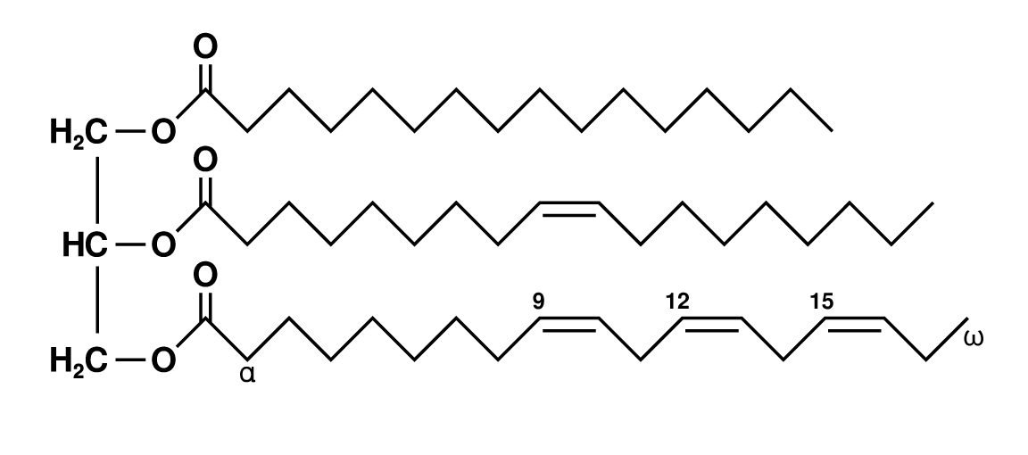 Image shows a model of a triglyceride. The glycerol molecule runs vertically along the left, and three saturated fatty acids run out horizontally from each of the three carbons in the glycerol molecule.