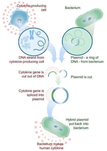 Genetic engineering in medicine