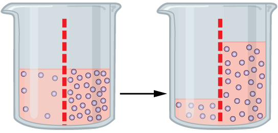 Diagram shows a time lapse of the contents of a beaker. The beaker's contents are separated into two with a semi-permeable membrane. One the left side of the beaker, there is a solution with low amount of solutes. One the right side of the beaker, there is a solution with a high amount of solutes. The second half of the diagram shows the same beaker after time has passed. Since the solutes could not move through the semi-permeable membrane, the water (the solvent) has moved to the right side, leaving less solution on the left side, but equalizing the concentrations of the two sides.